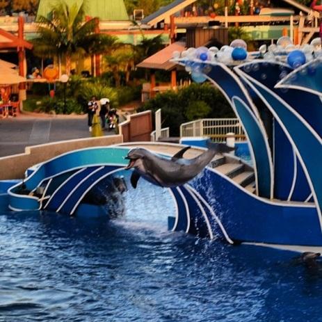 Golfinho acrobata