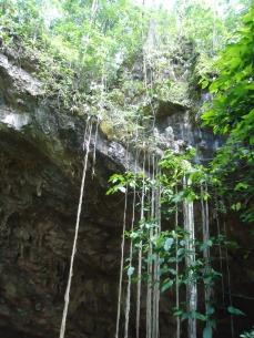 Vegetação da Entrada da Caverna - Foto by ClauGrunow