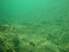 A água é mais esverdeada - Photo by ClauGrunow
