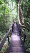 Escadas da trilha - Photo by Claudia Grunow