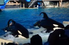 Show das Orcas