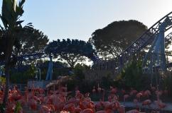 Flamingos e a montanha Russa