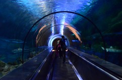Aquário em forma de túnel