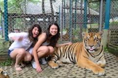 Eu bem calma com os outros tigres que estavam se aproximando