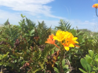 Flores encontradas nas Trilhas - Photo by Claudia Grunow