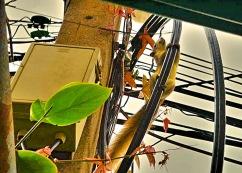 Esquilo alegrando o dia em Bangkok - Photo by Claudia Grunow