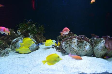 Aquário de peixes -Photo by Claudia Grunow