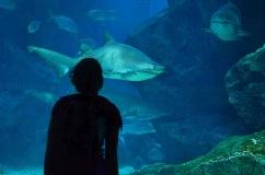 MInha amiga conquistando um Tubarão - Photo by Claudia Grunow