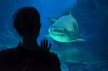 Tubarão Hipnotizado-  Photo by Claudia Grunow