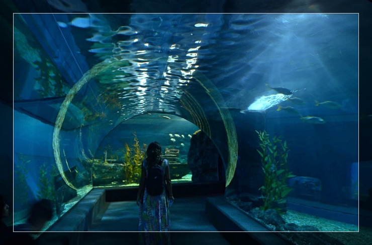 Túnel no Siam Ocean World